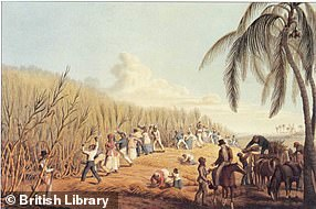 The Sugar Revolution, the introduction of sugarcane from Dutch Brazil, in the 1640s was very profitable but came at a great social cost