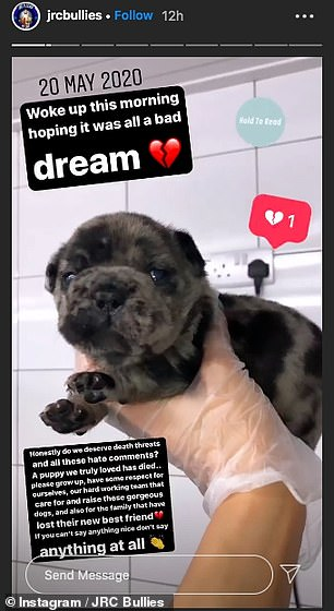 Heartbroken: JRC Bullies, who gave birth to Rollo, wrote on Instagram asking people to stop sending hate comments