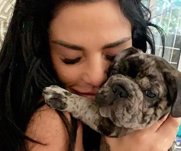 Katie Price 'cheated' after a dog breeder advised her to illegally give her puppy hemp oil Rollo