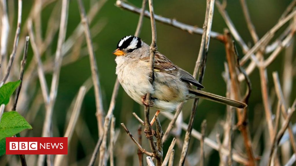 How the closed birds sang to a different tune
