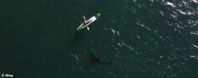 Mr. Smith filmed the horrific encounter from his kayak, while his friend Nick O'Brien shot a drone (pictured)