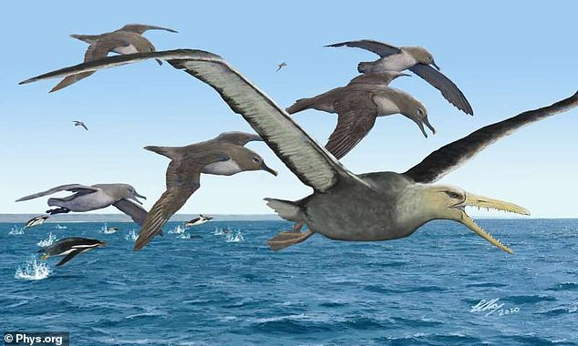 The pelagornithid (center) rose above Earth's oceans more than 40 million years ago.  With a wingspan of more than 20 feet, it may be the largest flying bird ever