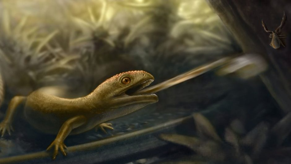 A 99 million year old amphibian has been found with a slingshot tongue