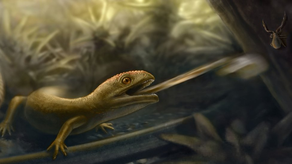 illustration-of-an-Albanerpetontid-with-a-projectile-tongue