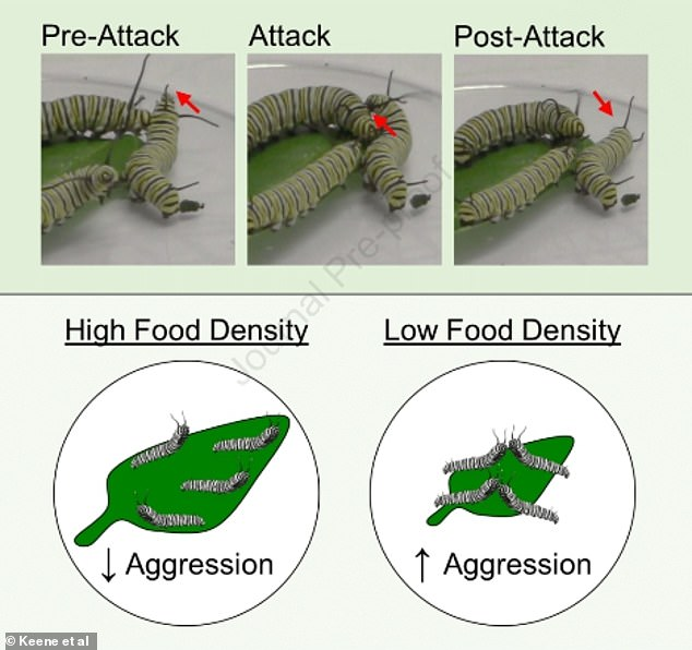 Researchers found an increase in aggressive behavior - in the form of