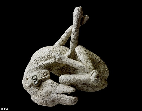 A plaster cast of a dog, from the house of Orpheus, Pompeii, 79 AD.  Around 30,000 people are thought to have died in the chaos, and the bodies are still being discovered to this day