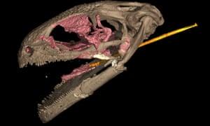 Computerized tomography examination of an albanerbitontide skull