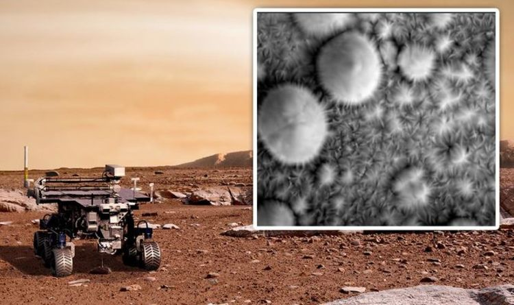 "NASA's ""amazing"" Mars discovery spurred ""thriving life"" on the surface of the Red Planet 