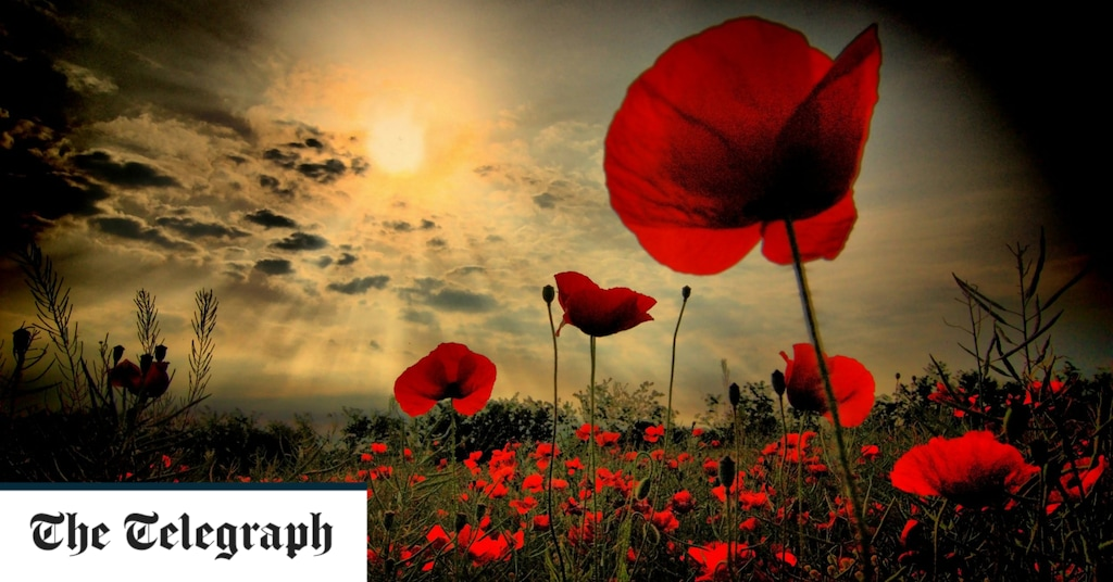 Poppy and ceremonies and why the act of remembering is important