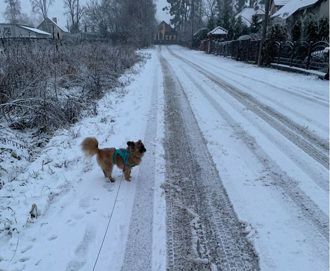 IMWM has issued warnings against heavy snowfall and ice.  It did snow, among other things, in Masovia
