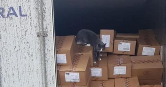 Pracownicy portu w Hajfie w Izraelu znaleźli kota w kontenerze z cukierkami, który przypłynął z Odessy na Ukrainie. Zwierzę płynęło 19 dni, żywiąc się słodyczami i pijąc skraplającą się wodę. Kot podróżnik przebywa na kwarantannie.