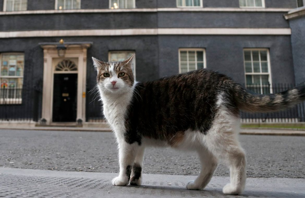 Cat Larry.  The one who stopped Trump.  Gwny Myszo Celebrates 10 Years Of Downing Street Subscription |  News from the world