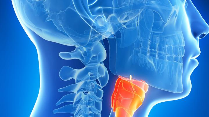 Consider tissue culture to treat serious laryngeal injuries
