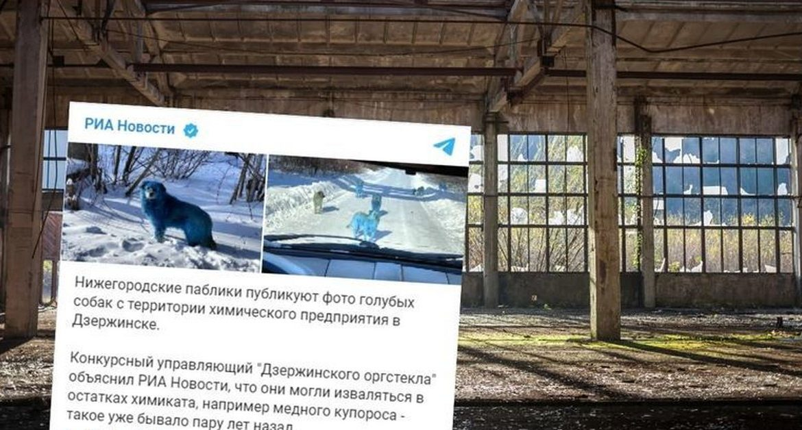 Russia.  Blue dogs near an abandoned factory