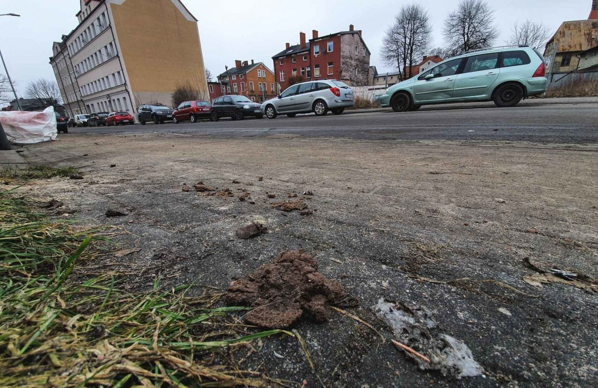 Cigarette butts, empty bottles, dog litter, no trash cans - that's what the residents of Sopsk are complaining about