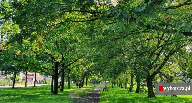 Planty will change into Dąbrowa Górnicza with the help of residents