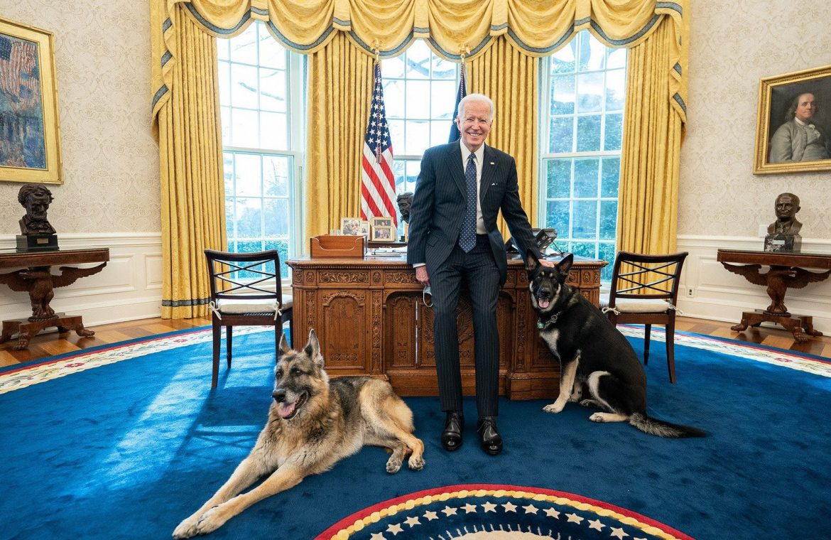 United States of America: Incident in the White House.  Joe Biden's dogs were brought back