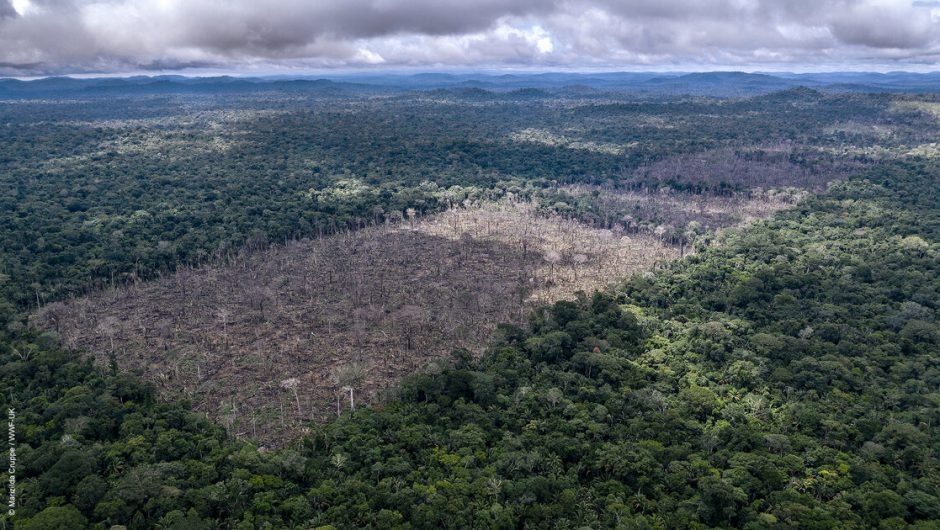 The European Union and China are the largest destroyers of rainforests.  Poland is ranked eighth among the countries of the European Union.