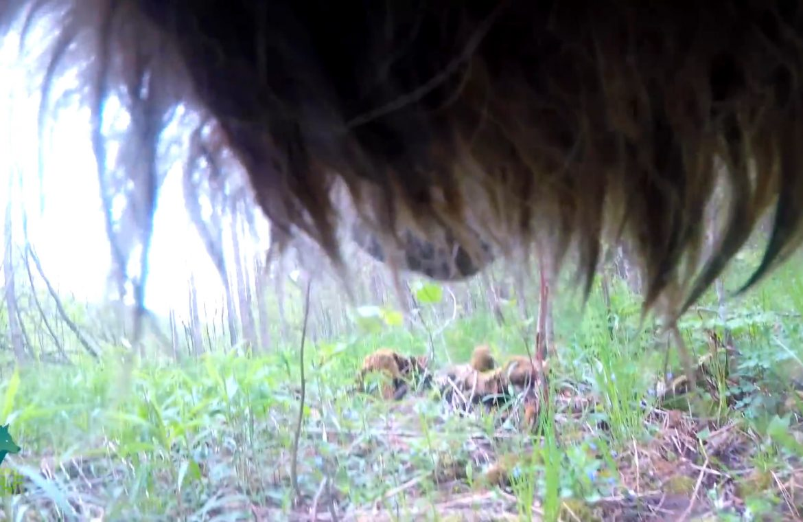 The world through the eyes of a wild wolf.  Amazing shots from the USA