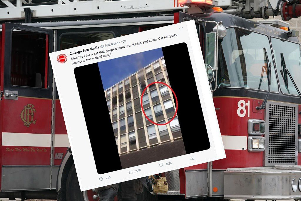 United States of America.  The cat jumped off the fifth floor and ran.  The video conquers the Internet