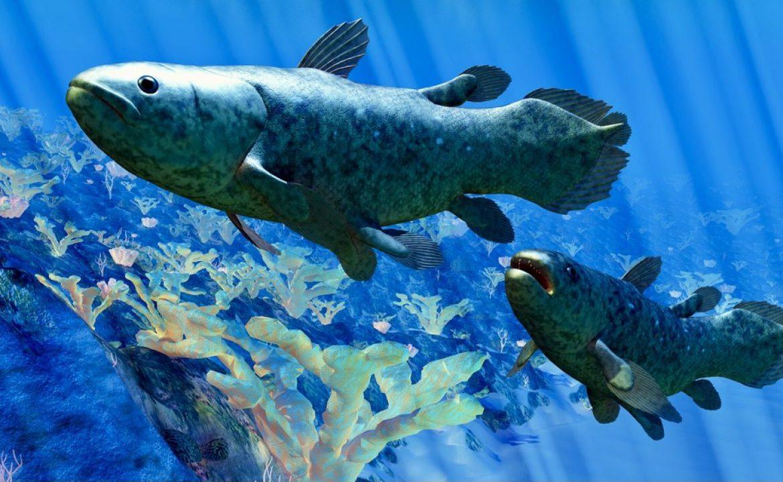 """Do maja 2020 roku udokumentowano aż 334 """"czworonożnych ryb"""" (fot. Shutterstock/Catmando)"""