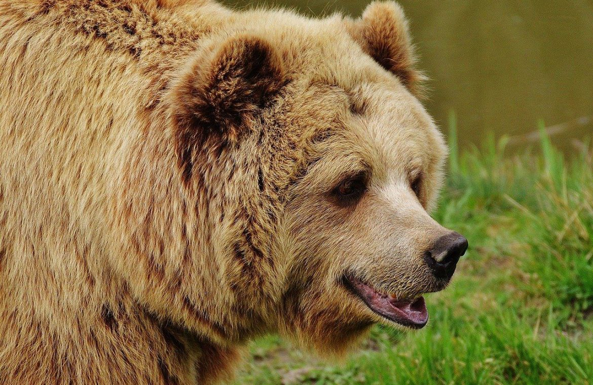 Tragedy in the United States.  The woman met bears as she walked