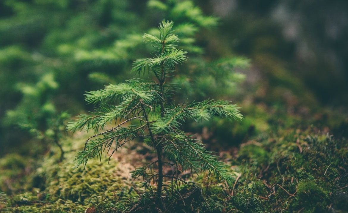 Tree planting is an excuse.  It calms the conscience and does not preserve the climate