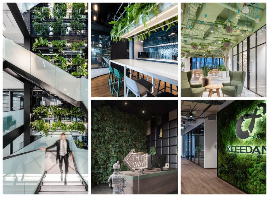 Evergreen in the Office: 10 Biophilic Design Projects