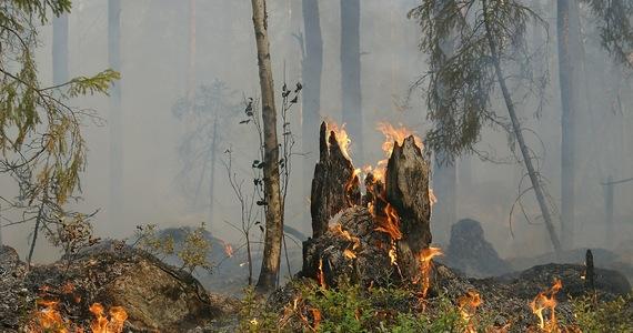 Prezydent USA Joe Biden ostrzegł, że zagrożenie pożarami na zachodzie Stanów Zjednoczonych jest obecnie największe w historii, a sytuacja pogarsza się ze względu na zmiany klimatu. Prezydent przyznał, że kraj ma wiele do nadrobienia, by być przygotowanym na takie zjawiska.