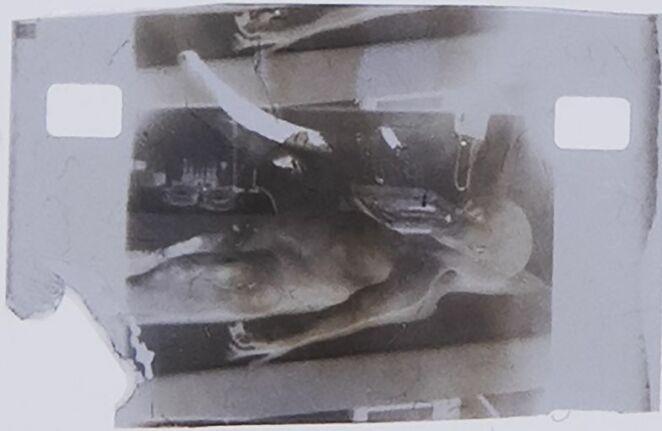 Alien autopsy 2