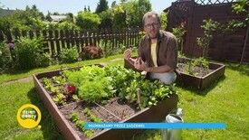 How are plants propagated by cuttings?  Learn about reliable methods for the gardener