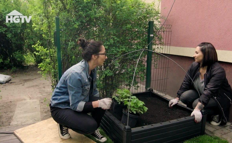 Dream Gardens.  How to arrange a small garden with a vegetable corner?