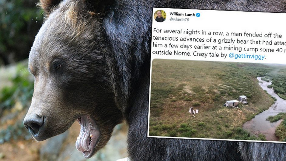 Alaska.  He lived in the wild and fended off bear attacks for a week