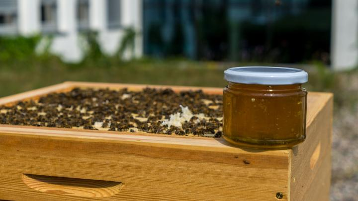 Bialystok / First honey harvest from the University of Bialystok apiary