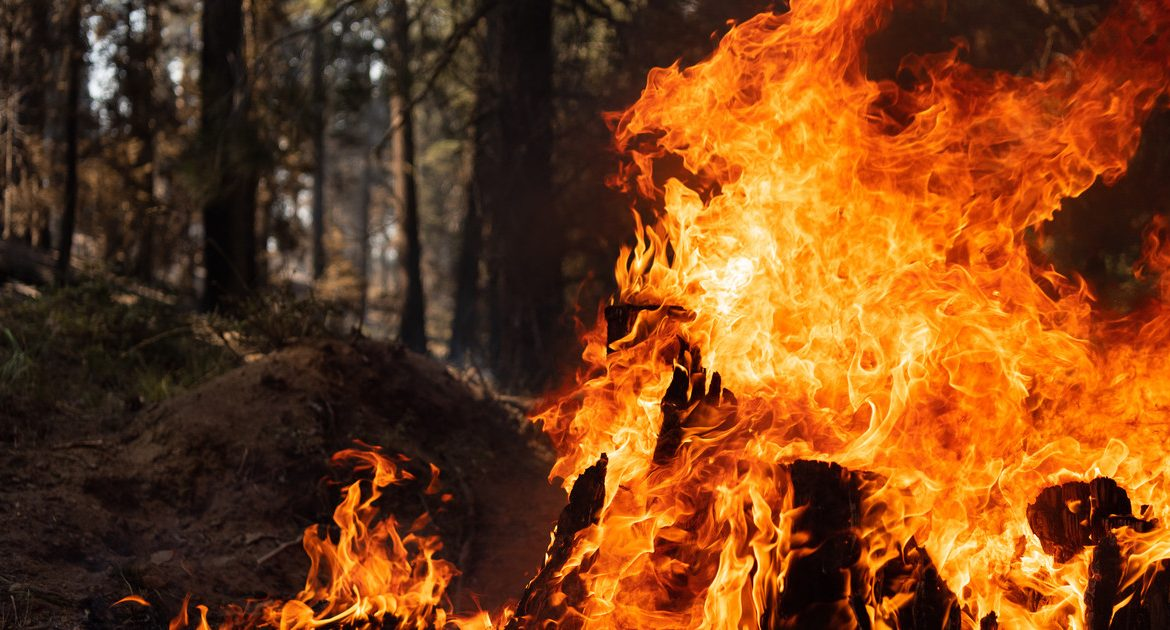 Massive fires in the western United States