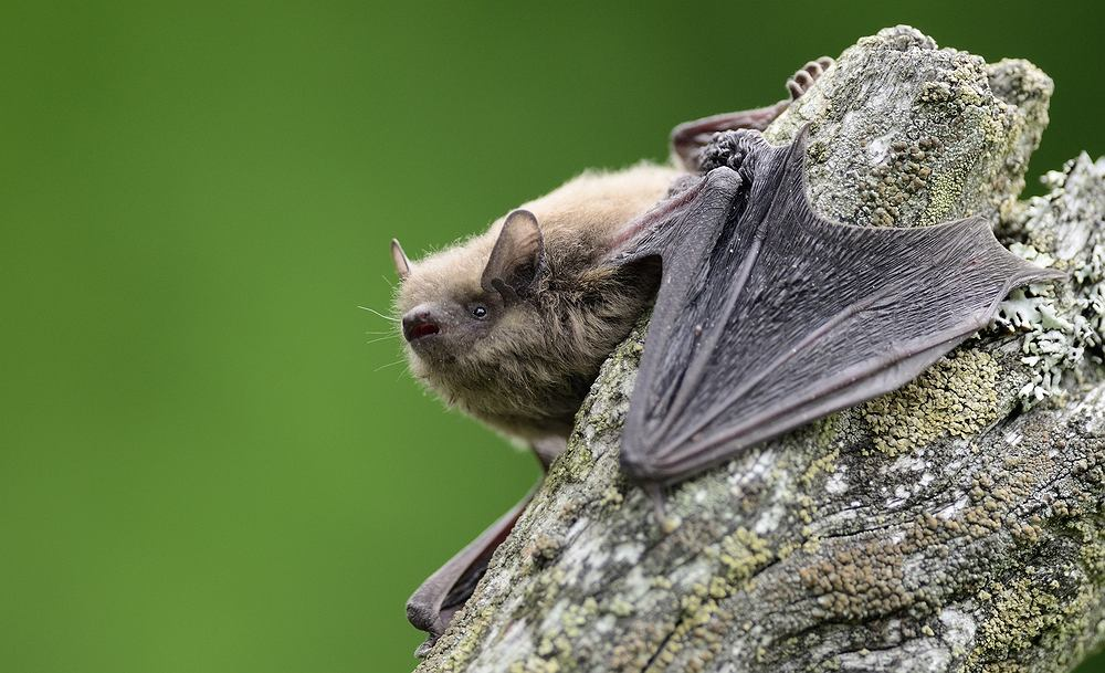 """The bat flew from Great Britain to Russia.  """"What an Olympian!"""""""
