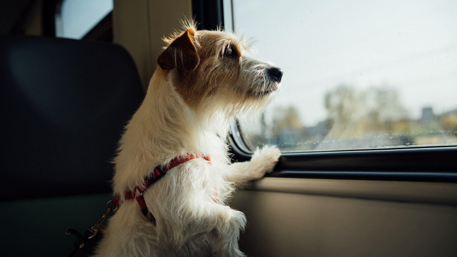 dog - image illustration