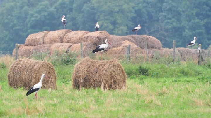 Warmińsko-mazurskie / Most storks have already left