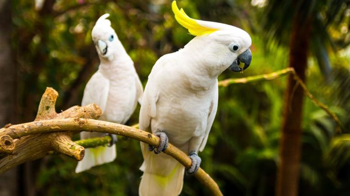 macaw parrots |  Science in Poland