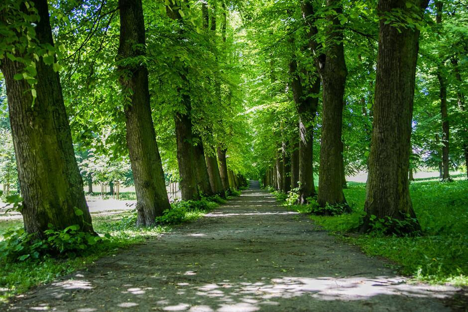 Gdansk promotes green municipal administration services