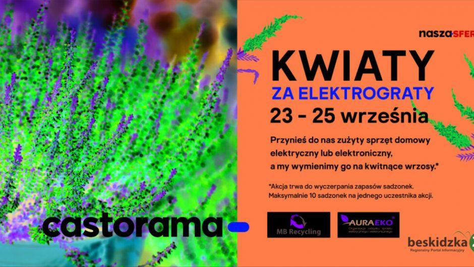 elektrograty flowers - Beskidzka24.pl