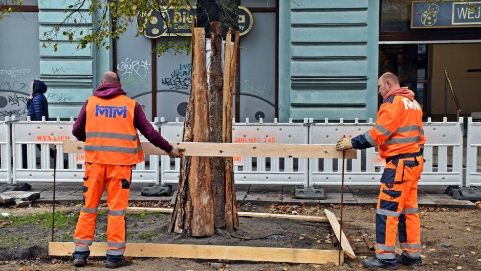 Aleja Wojska Polskiego - with designation of tree protection zone